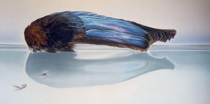 """Little Wing web,  24""""h x 48""""w, oil & alkyd on canvas,  $3300.00Cdn"""