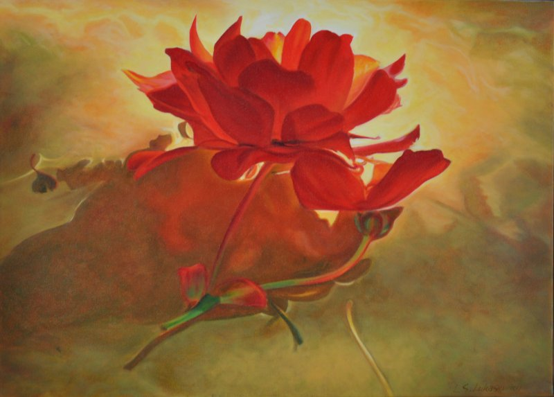 FLOATING BEGONIA, oil & alkyd on canvas, 20 in. H x 28 in. W, $ 2000.00Cdn